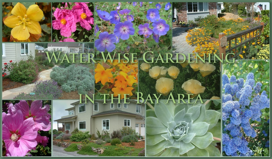 """area bay by essay gardener gardening master practical Master gardener fall/winter seminar """" this new venue promises even more to eagerly awaiting bay area gardeners """"practical gardening."""